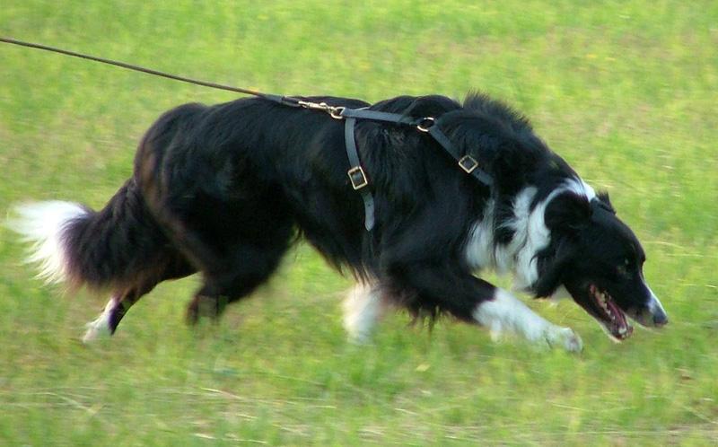Dog Training Mn